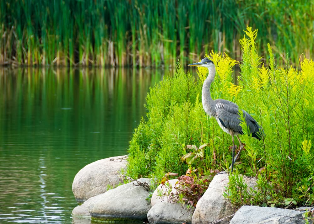 Visit the Everglades during a Port Canaveral Cruise with Norwegian