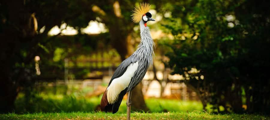 Visita el Audubon Park en crucero a Nueva Orleans