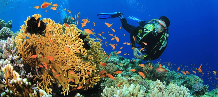 Sal a bucear en Oranjestad durante tu crucero por el Caribe